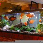 Выбираем красивый аквариум для спальни