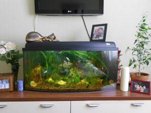 Экологический аквариум в спальне