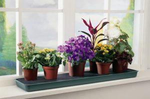 Какие цветы должны стоять в спальне