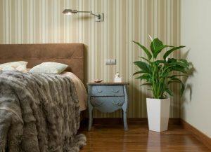 Комнатные цветы для обустройства спальни
