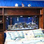 Плюсы и минусы использования аквариума в спальне