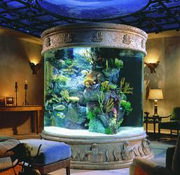 Виды аквариумов и способы их размещения