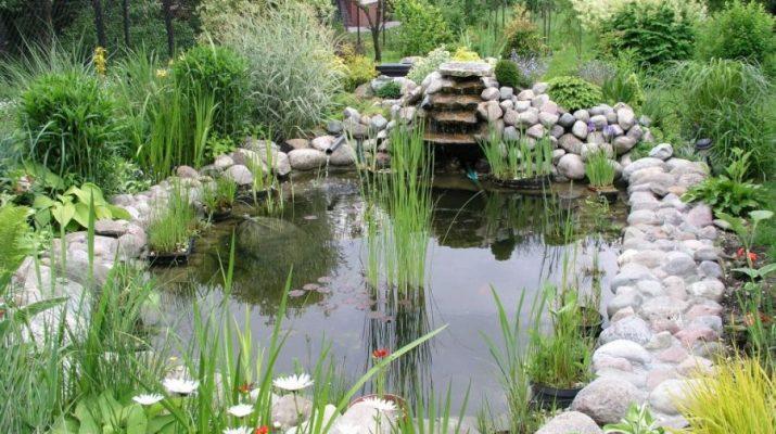 Постройка водоема в саду