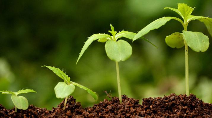Преимущества и основные виды стимуляторов роста растений